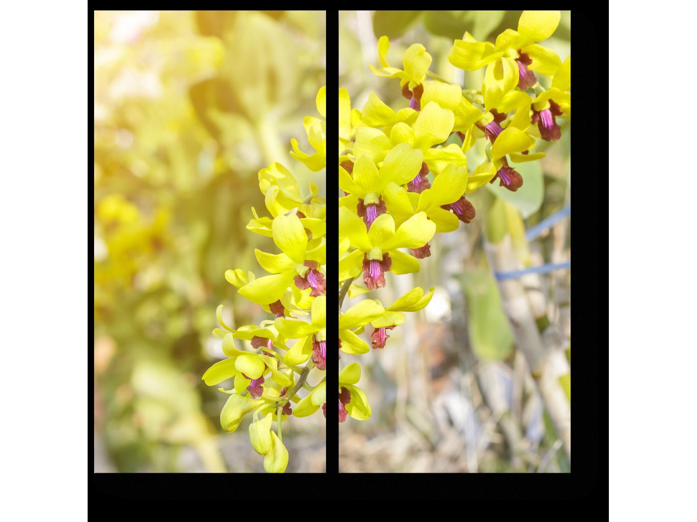 Модульная картина Цветок Таиланда (40x40) фото