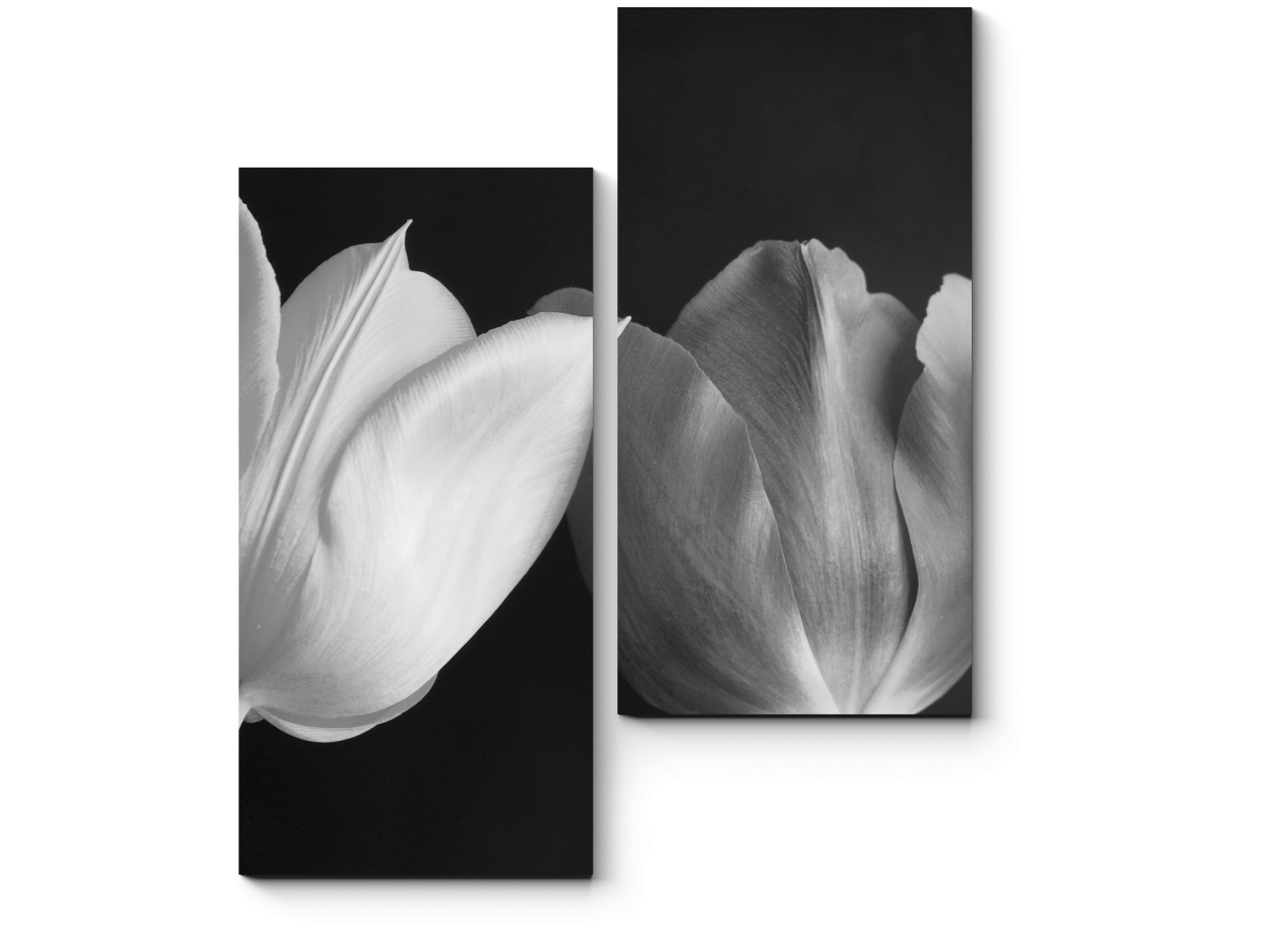 Модульная картина Монохромные тюльпаны (40x50) фото