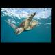 Морская обитательница