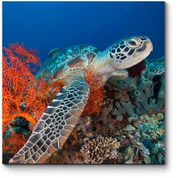 Модульная картина Морская черепаха в кораллах