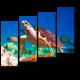 Черепаха в коралловом рифе