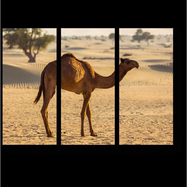 Модульная картина Верблюд, очарованный песками
