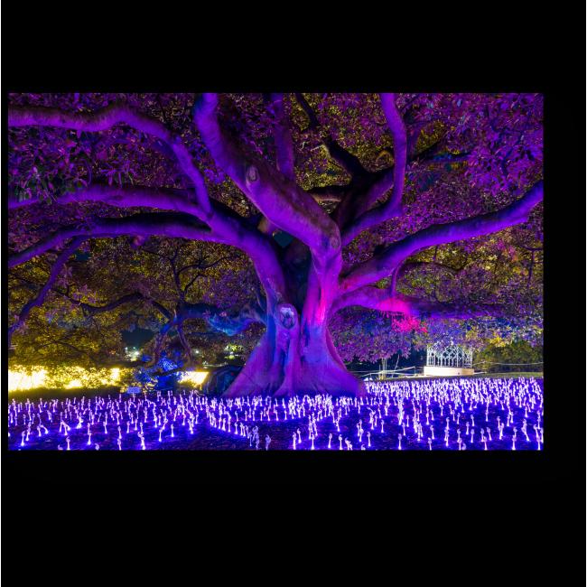 Модульная картина Фестиваль света, Сидней