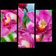 Тайские орхидеи, Чиангмай (Таиланд)