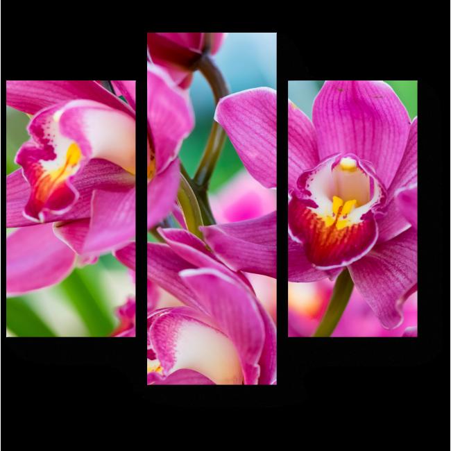 Модульная картина Тайские орхидеи, Чиангмай (Таиланд)