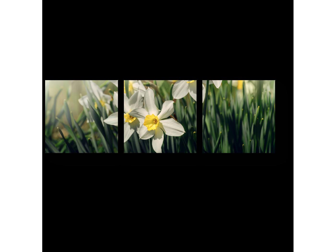 Модульная картина Весенняя прелесть (60x20) фото