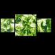 Филиппинские водоросли
