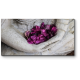 Лепестки в каменных руках