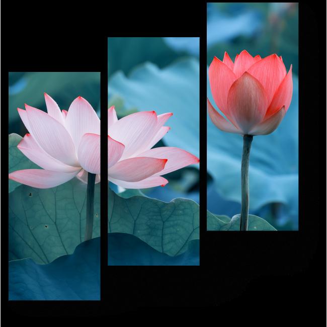 Модульная картина Цветок лотоса