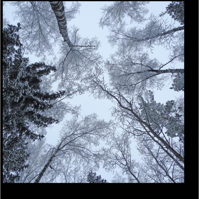 Модульная картина Ветви сплелись