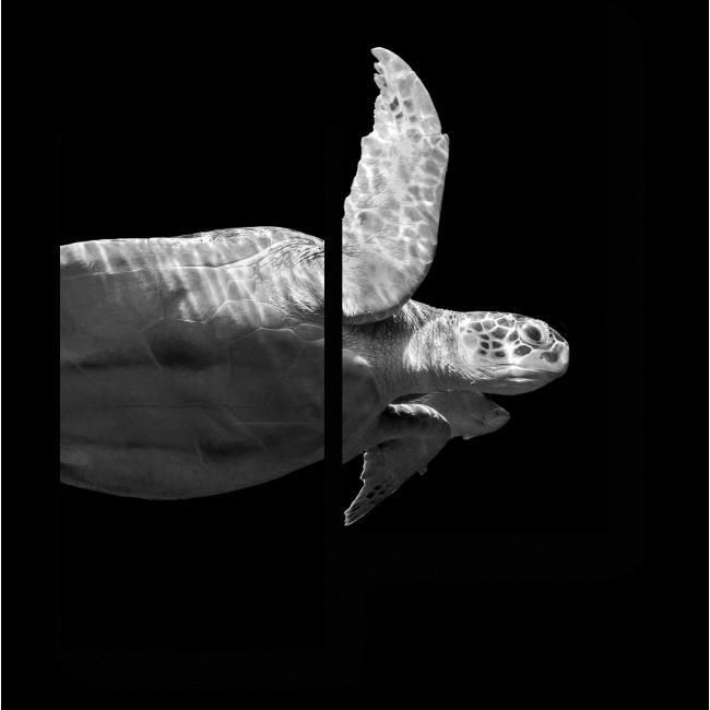 Модульная картина Мудрая обитательница моря