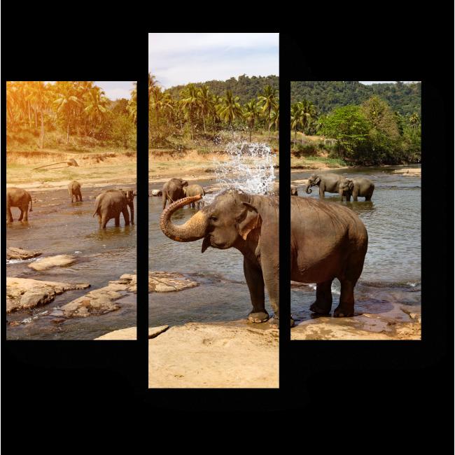 Модульная картина Купание слонов