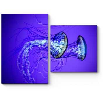 Пара изящных медуз