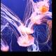 Очаровательные медузы