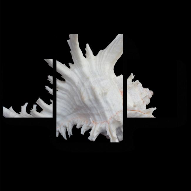 Модульная картина Морская раковина