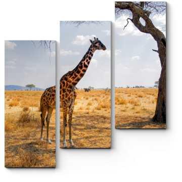 Жираф в пустыне