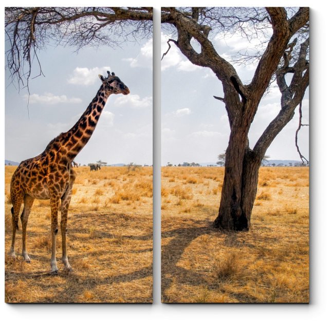 Модульная картина Жираф в пустыне