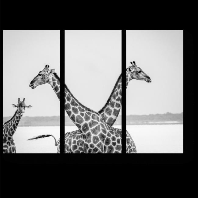 Модульная картина На просторах Африки