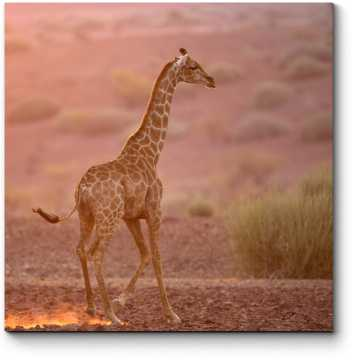 Одинокий жираф