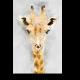 Акварельный жираф