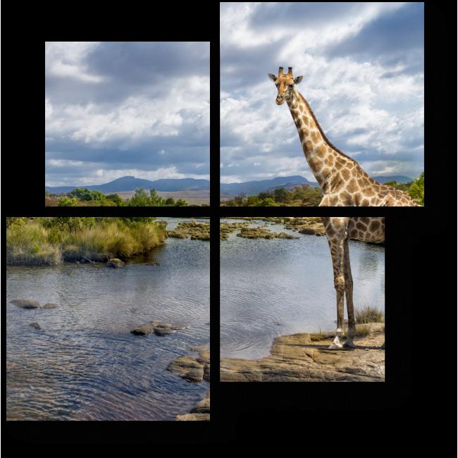 Модульная картина Жираф на водопое