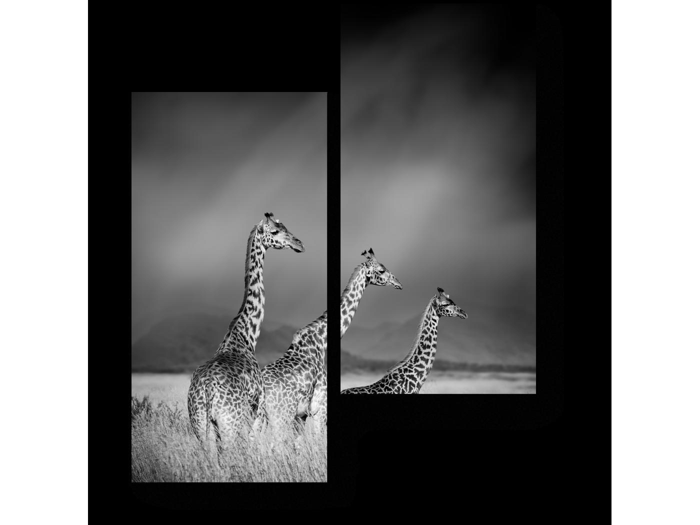Модульная картина Три жирафа (40x50) фото