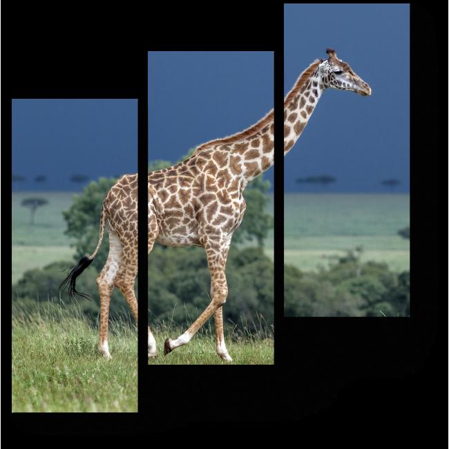 Модульная картина Жираф на прогулке