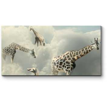 Жирафы в облаках
