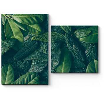 Зеленые сочные листья