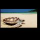 Черепаха принимает солнечные ванны