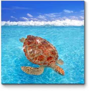 Долгожительница Карибского моря