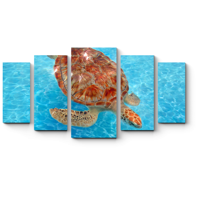 Модульная картина Долгожительница Карибского моря