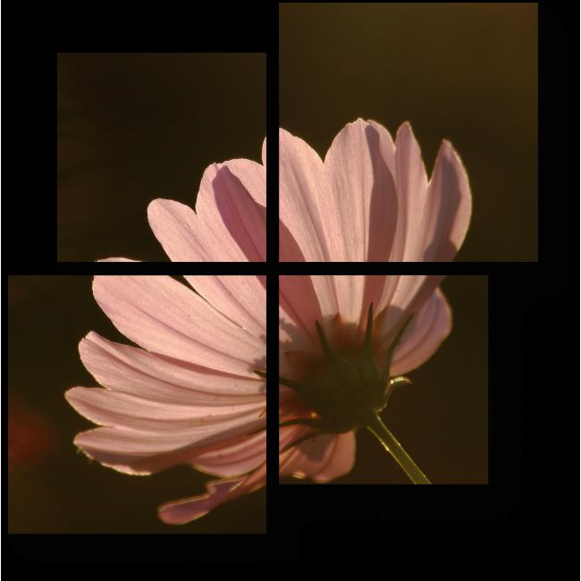 Модульная картина Солнечные лепестки