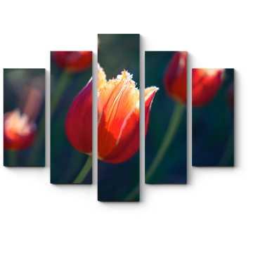 Модульная картина Красивый тюльпан