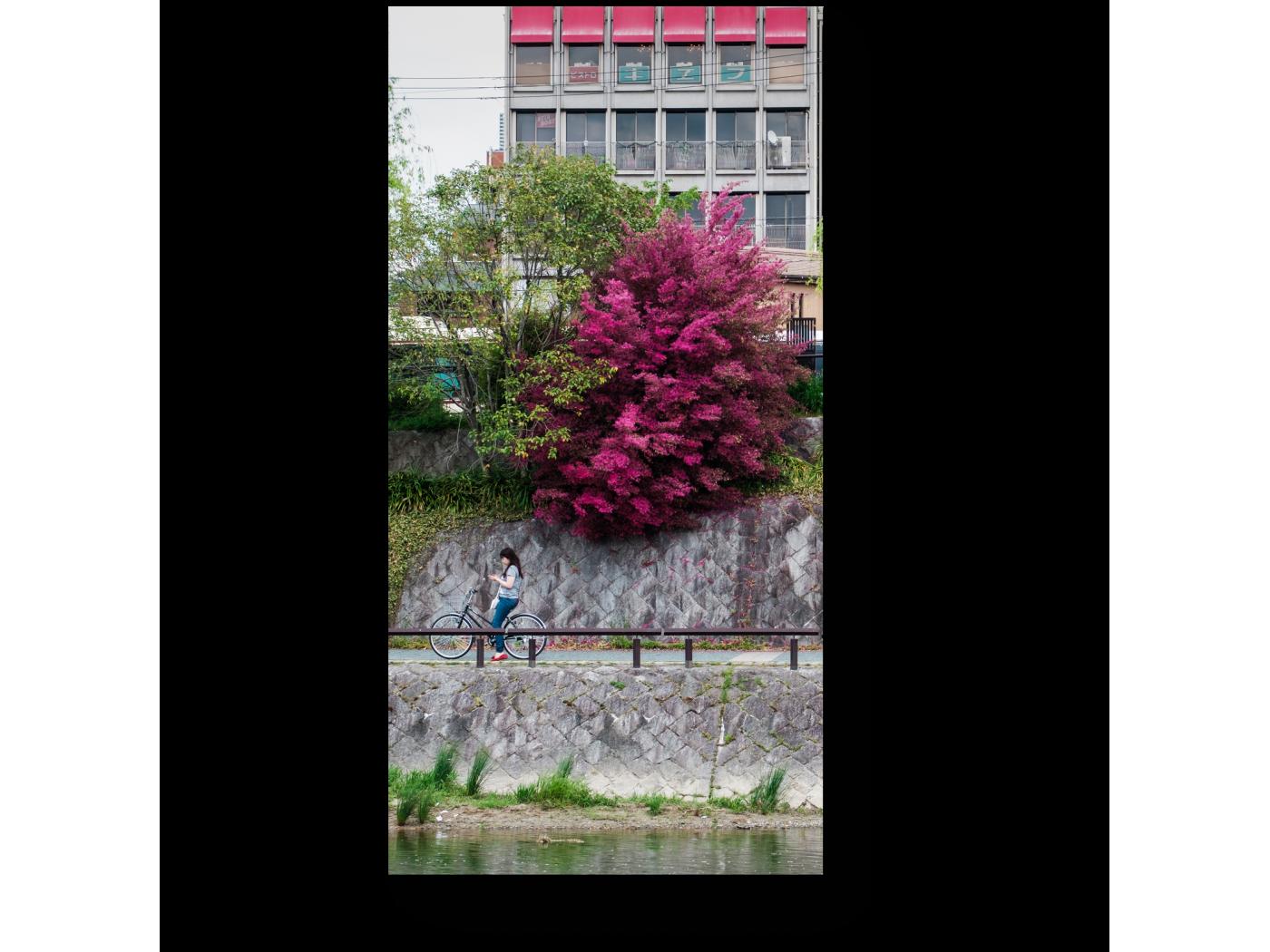 Модульная картина На набережной реки Камо, Киото (20x40) фото