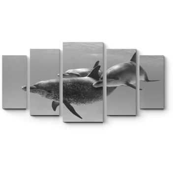 Трио пятнистых дельфинов