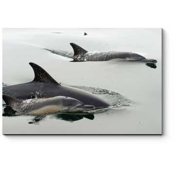 Счастливая семья дельфинов