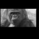 Возвращение Кинг-Конга