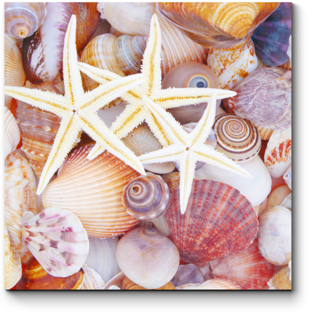 Модульная картина Вся красота моря