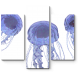 Пара голубоватых медуз