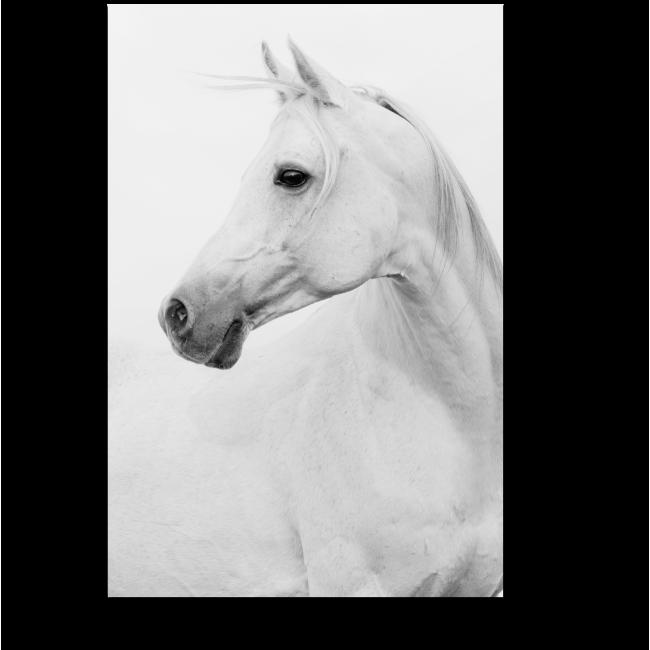 Модульная картина Белая лошадка