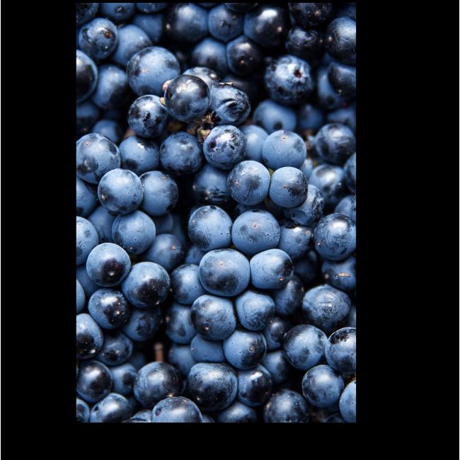 Модульная картина Гроздья винограда
