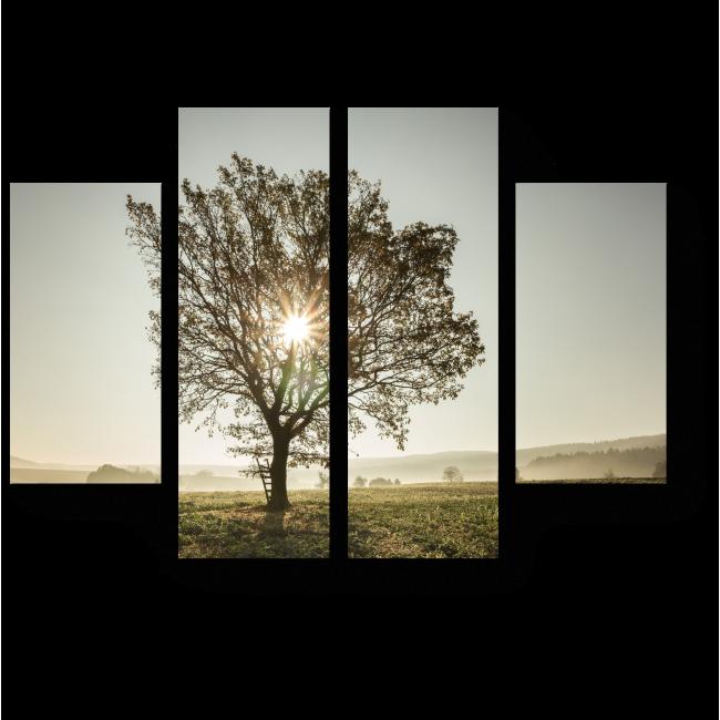 Модульная картина Солнце сквозь ветви