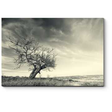 Дерево, стоящее посреди поля