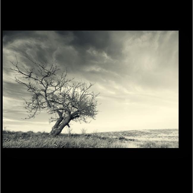Модульная картина Дерево, стоящее посреди поля