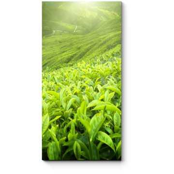 Бескрайняя зелень полей