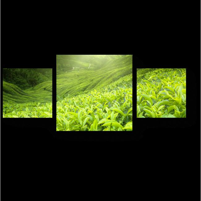 Модульная картина Бескрайняя зелень полей