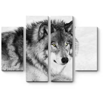 Модульная картина Черно-белый портрет волка