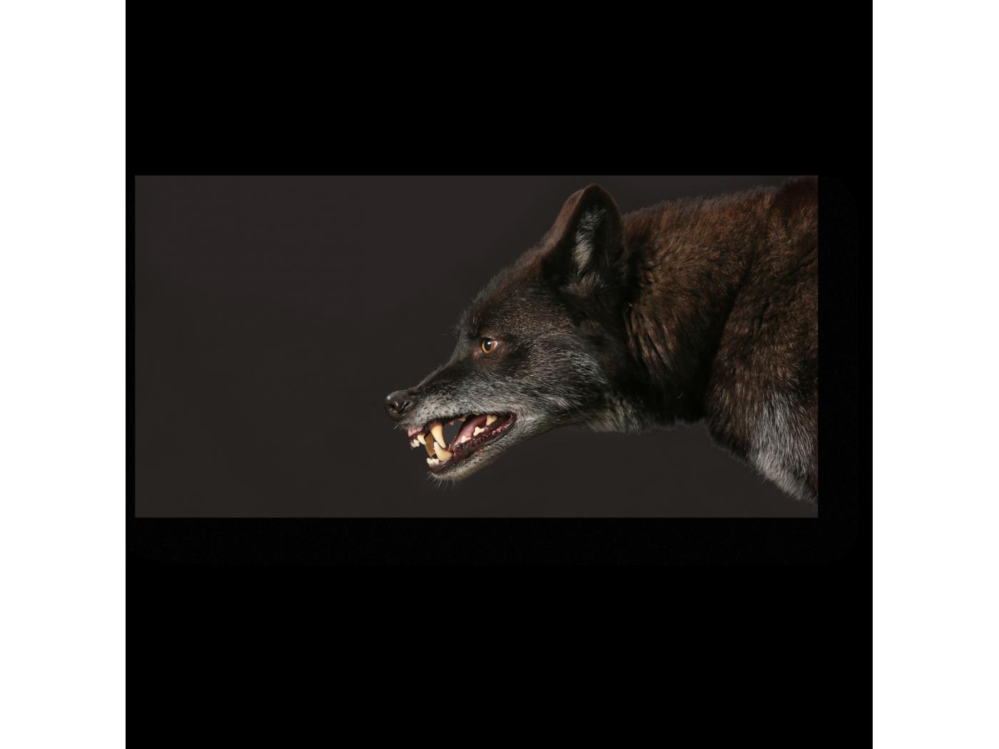 Модульная картина Не злите волка (40x20) фото