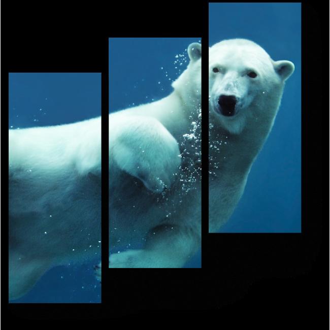 Модульная картина Полярный ныряльщик